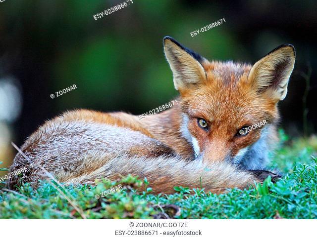 tired rox