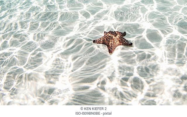 Starfish, Cozumel, Quintana Roo, Mexico