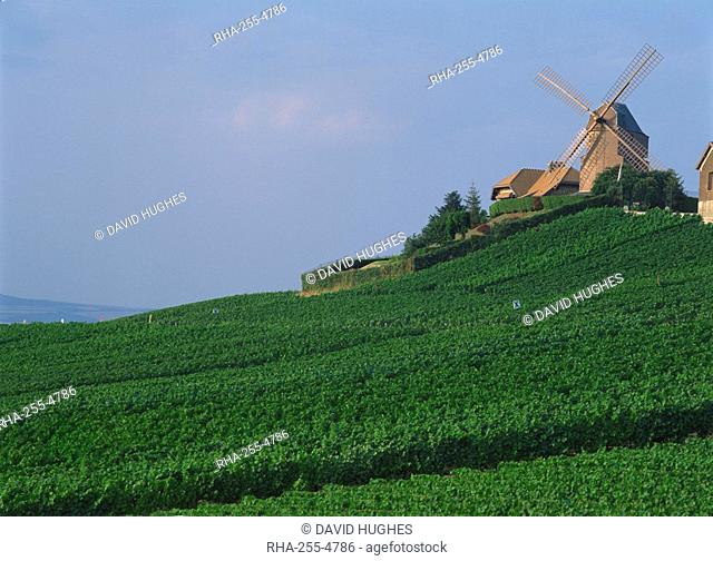 A windmill above a slope of Champagne vineyards at Versenay in Champagne-Ardennes, Marne, France, Europe