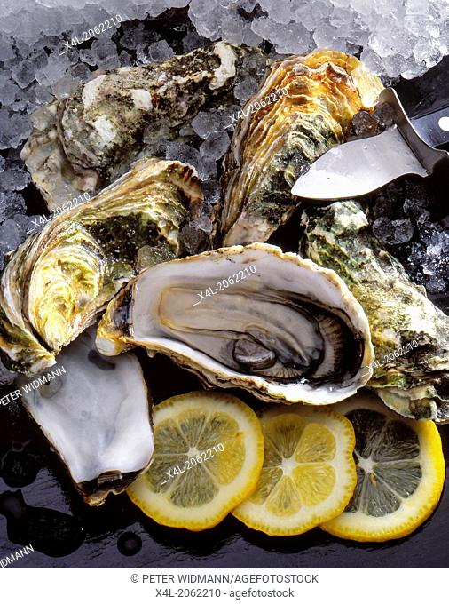 Seafood, fresh oysters