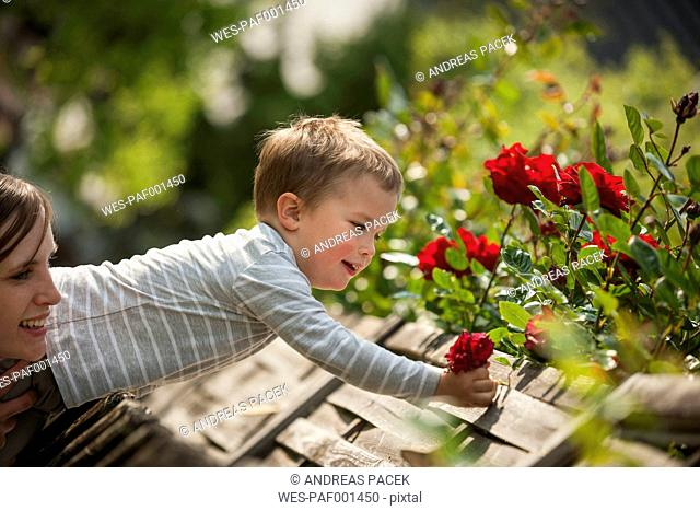 Mother helping his little son picking flowers