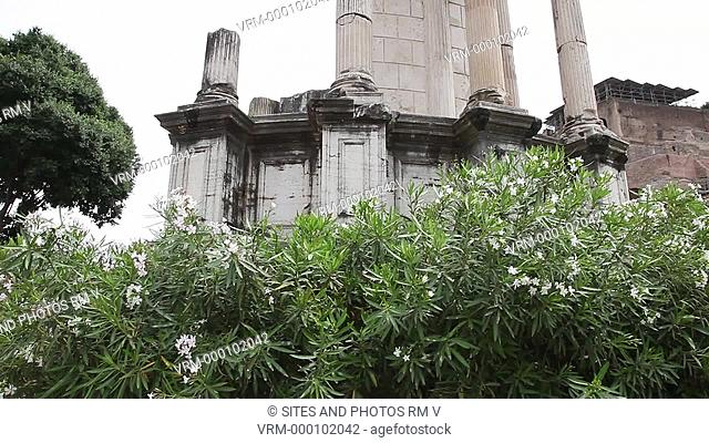 MS, TILT up, Daylight. The circular Temple of Vesta is located in the Roman Forum within the complex of the House of the Vestal Virgins