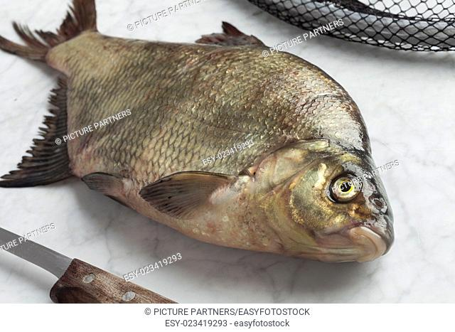 Fresh caught common bream