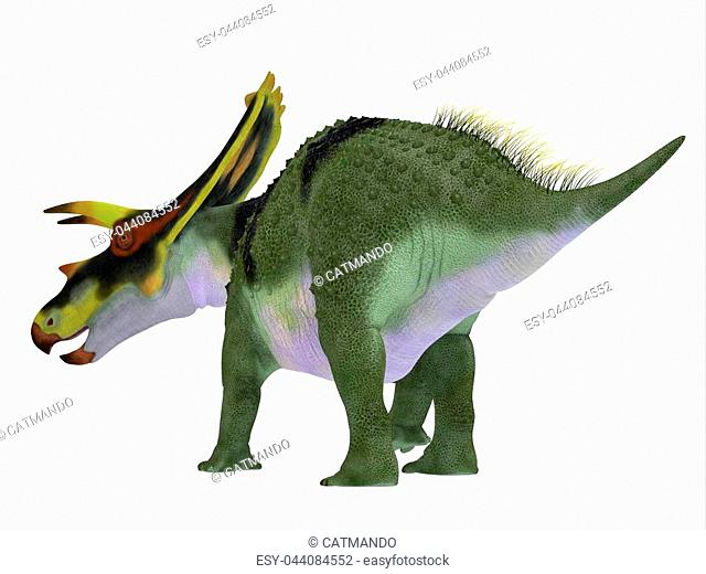 Anchiceratops ornatus was a herbivorous Ceratopsian dinosaur that lived in Alberta, Canada in the Cretaceous Period