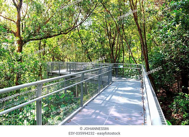 Forest Walk of Telok Blangah Hill Park rainforest, Singapore