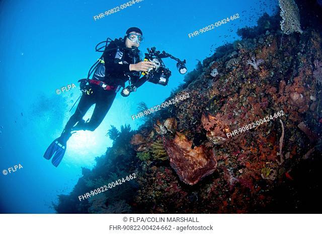 Scuba diver with underwater camera equipment, swimming over coral wall at caldera dive site, Mount Komba, Alor Archipelago, Lesser Sunda Islands, Indonesia