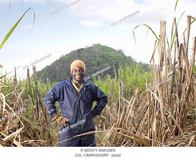 Sugar Cane Worker In Field