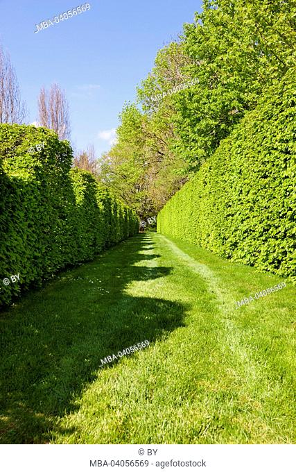 Box hedge in the castle grounds, Cormatin, France