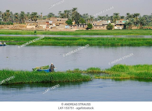 cruise on the Nile, farmer with boat harvesting, houses and palm trees in background, Nile between Luxor and Dendera, Egypt, Africa