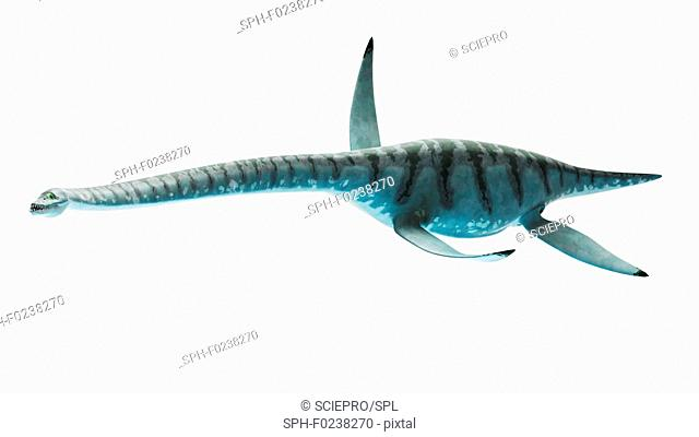Illustration of styxosaurus