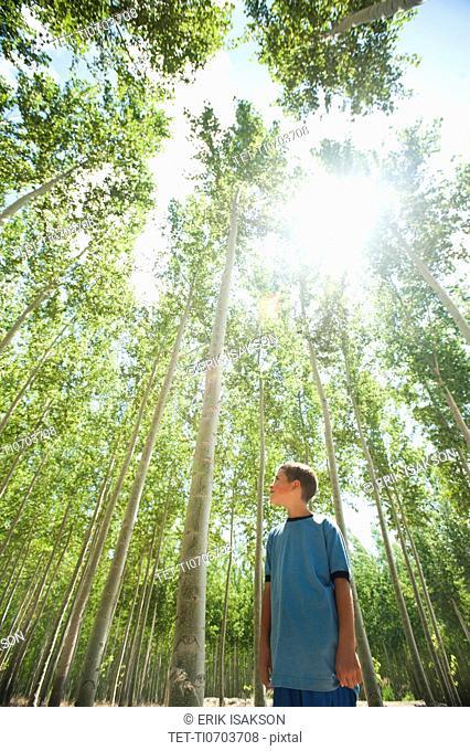 USA, Oregon, Boardman, Boy 8-9 looking up at poplar trees