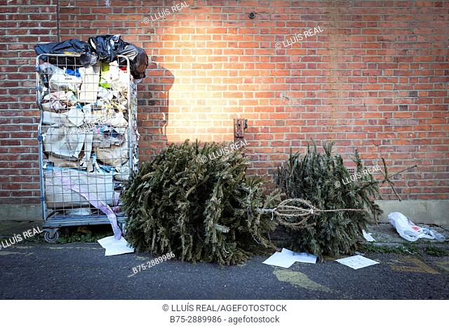 Chistmas trees dumped on the street. London, England