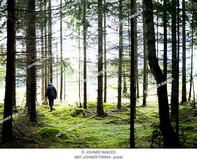 A man going mushrooming, Sweden