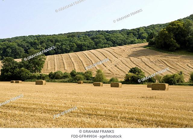 A harvested field in West Sussex