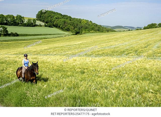 Rider on a horse in a field Cavaliere sur son cheval dans un champ Credit: JMQuinet/Reporters Reporters / QUINET