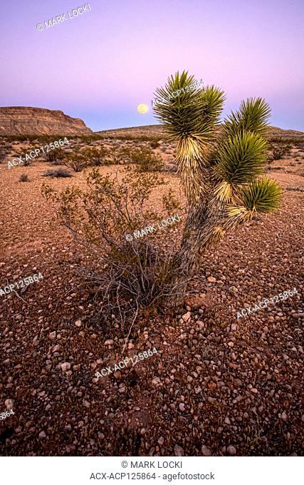 Full moon rising in the desert, Red Rock National Conservation Area, Nevada, USA