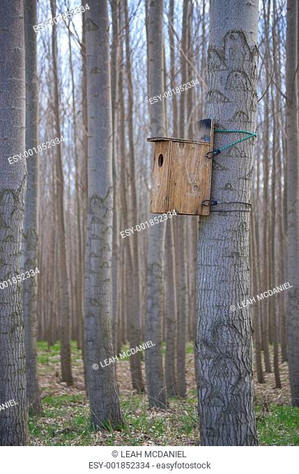 Birdhouse in Poplar Grove