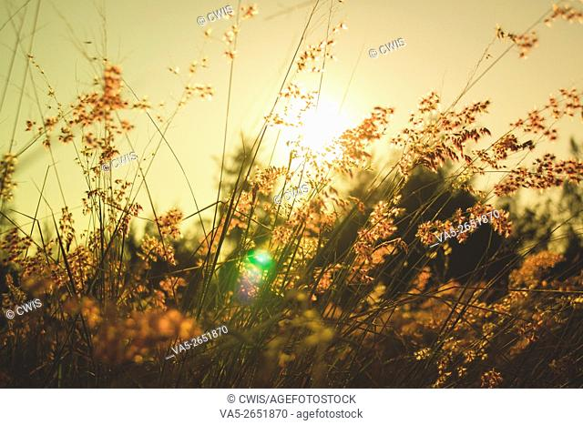 The beautiful view of many beautiful wild flower with the warm sunshine