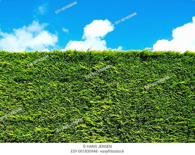Image of the green grass from a football field