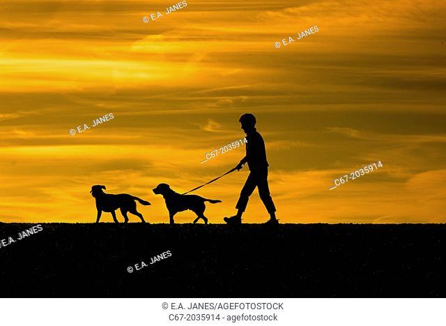 Walking dogs on Dunwich beach Suffolk