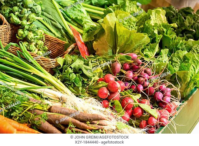 Fresh vegetables at a farm market