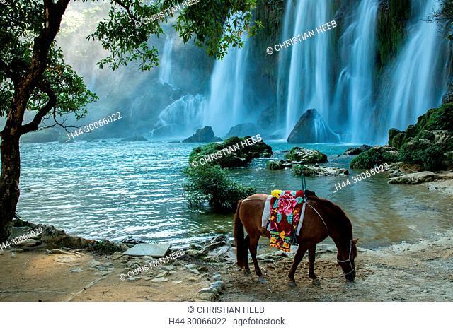Asia, Asien, SE Asia, Vietnam, Northern, Daxin County, Ban Gioc Falls, Quay Son river