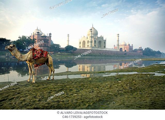 Taj Mahal, seen from the East along the Yamuna River  Uttar Pradesh  Agra, India, Ganges River