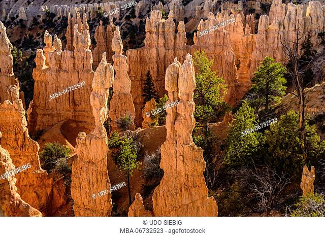 The USA, Utah, Garfield County, Bryce Canyon National Park, view from the Fairyland loop Trail close Fairyland Point