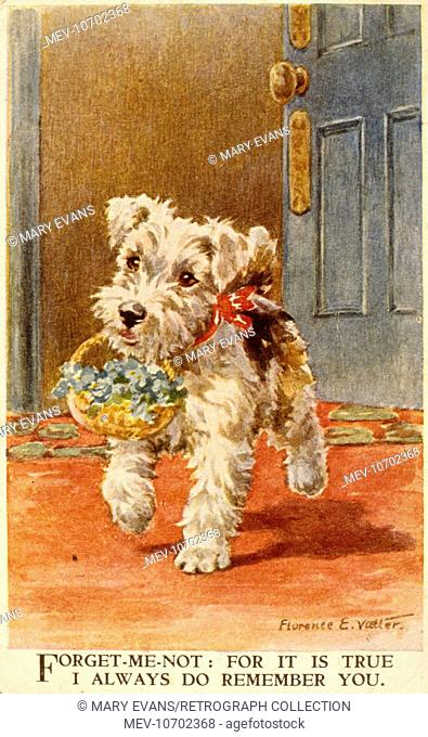 White Scots terrier puppy with a basket of forget-me-nots -- For it is true I always do remember you
