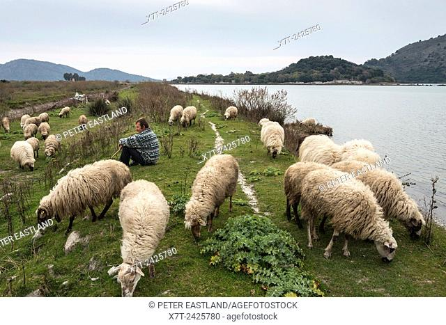 A shepheard with his flock on the Vrina plain at Butrint National Park, Southern Albania