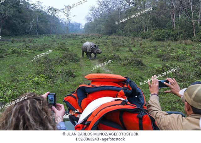 Safari, One-horned Asian rhinoceros (Rhinoceros unicornis), Chitwan National Park, Inner Terai lowlands, Nepal, Asia, Unesco World Heritage Site