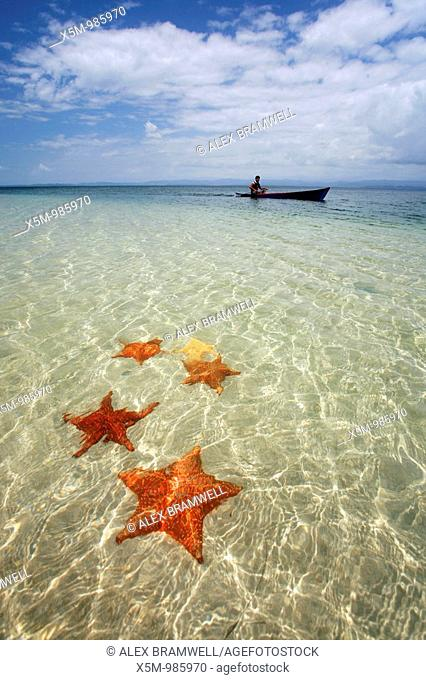 Starfish in Bocas del Toro, Panama, with boy in dugout canoe behind