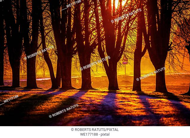 Silhouette of trees in sunset. Trees at sunset. Beautiful spring landscape in Latvia. Beautiful landcape of trees with sunset twilight background