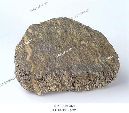 Metamorphic rock : Gneiss
