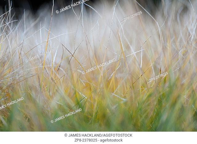A close up of grass with subtle beige and green colours