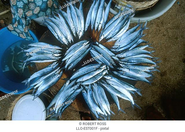 A View of Fish Stacked Together at a Local Market  Sao Tome, Sao Tome & Principe