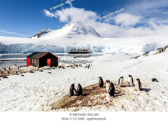 Gentoo penguins (Pygoscelis papua) surround the buildings at Port Lockroy, Antarctica, Southern Ocean, Polar Regions