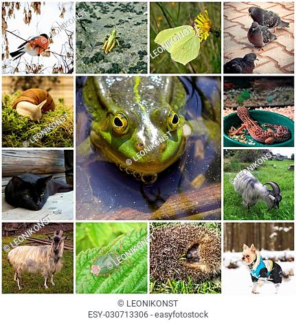 A collage of 13 pictures with different animals. In the center of the frog