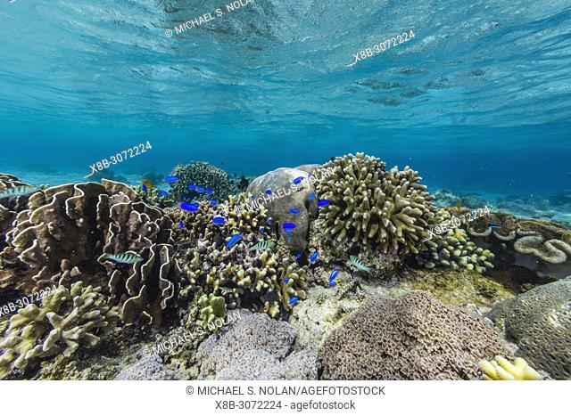 Profusion of hard and soft corals and reef fish underwater on Mengiatan Island, Komodo National Park, Flores Sea, Indonesia