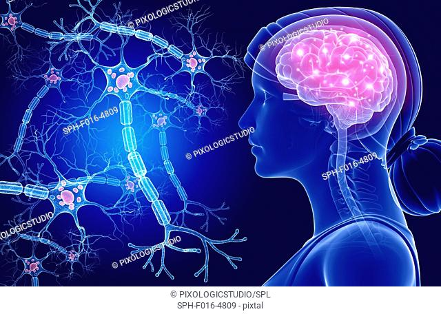 Illustration of a human brain and nerve cells