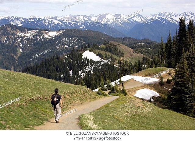 Hiker on Hurricane Ridge Trail - Olympic National Park, Washington
