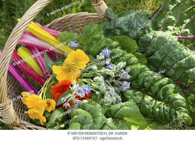 A basket of colourful chard, borage and nasturtium