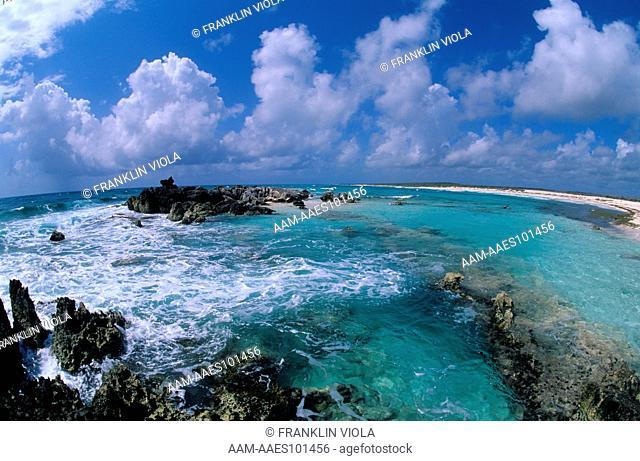 Ironshore, old Coral, Windward, East Coast, Cozumel, Mexico