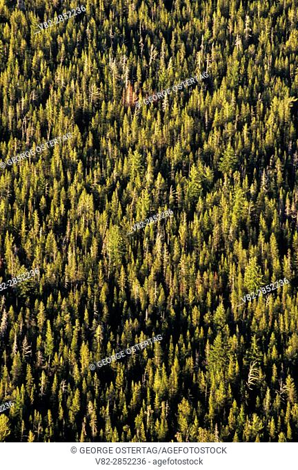 Forest view, Newberry National Volcanic Monument, Oregon