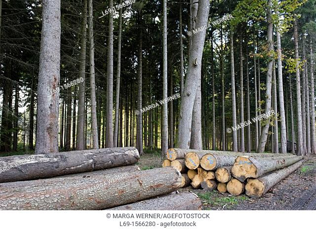 Wood harvest, cultivated forest, Schleswig-Holstein, Germany