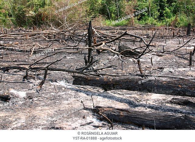 Destroyed Forest, Belém, Pará, Brazil