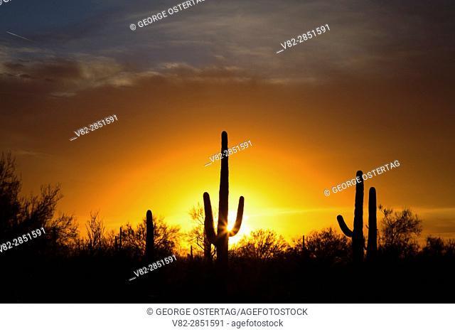 Saguaro sunset, Picacho Peak State Park, Arizona