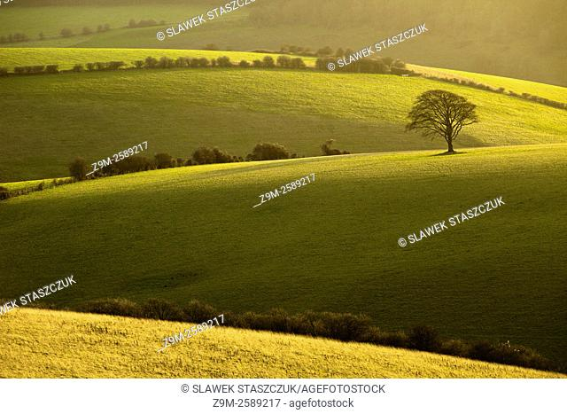 Winter afternoon on the South Downs near Brighton, East Sussex, England