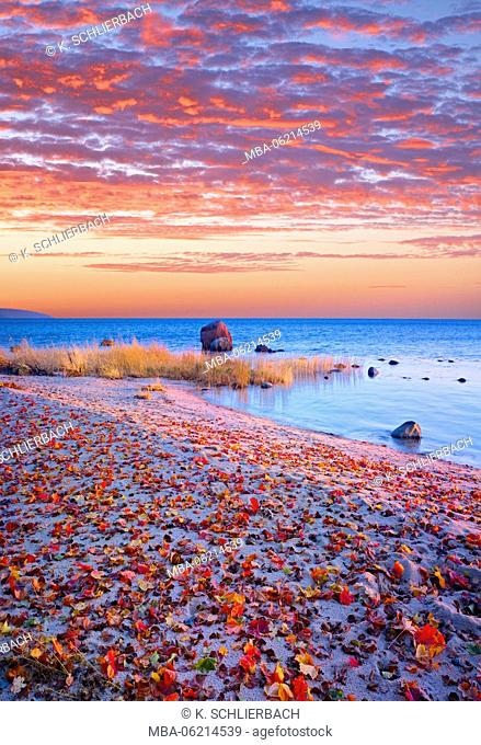Sweden, Skane, fall by the Hanö bay, red autumn leaves on the sandy beach, stones in the ocean, red morning sky, Baltic beach
