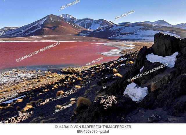 Laguna Colorada with red water by high algae content, near Uyuni, Lipez, Bolivia